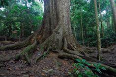 L'excursion au parc national Cuc Phuong est arrangé en deux jours, au départ de Hanoi. Ce circuit est en fait une combinaison de trekking au parc national de Cuc Phuong