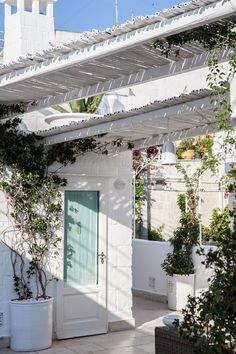 Jasmine climbers on the whitewashed terrace at Don Ferrante in Monopoli, Puglia, Italy