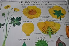 Vintage French School Poster, Vintage wall art, Botanical educational poster, French classroom posters, Flower poster