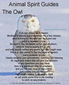 Animal Spirit Guide : The Owl. This is my animal spirit guide. A barn owl Spirit Animal Totem, Animal Spirit Guides, Magick, Witchcraft, Animal Symbolism, Animal Meanings, Power Animal, Doreen Virtue, Wise Owl
