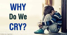 Our body produces tears out of utility and for protection, but did you know that we are the only animals that shed tears of emotion? http://articles.mercola.com/sites/articles/archive/2016/03/12/facts-about-crying.aspx