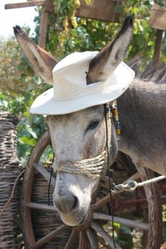 The hat makes this donkey adorable!