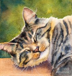 Cat Painting - Cat Nap by Bonnie Rinier