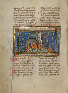 A Salamander; Unknown; Thérouanne ?, France (formerly Flanders); about 1270; Tempera colors, gold leaf, and ink on parchment; Leaf: 19.1 x 14.3 cm (7 1/2 x 5 5/8 in.); Ms. Ludwig XV 3, fol. 95v