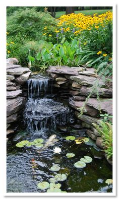 Koi Pond Design First Two Steps