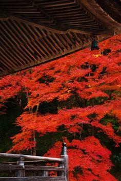 Shorin-in temple, Kyoto, Japan 勝林院 京都