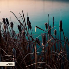 Lightroom Tips:      Cropped to square     Basic adjustments – Increased brightness and contrast     Hue and saturation have been adjusted to bring out the warm tones in the stalks of the cattails and the shift the color of the water.     Split toning – warm highlights     Sharpening