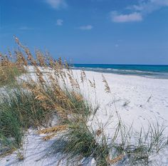 The dunes at Grayton Beach State Park near Seaside, Florida