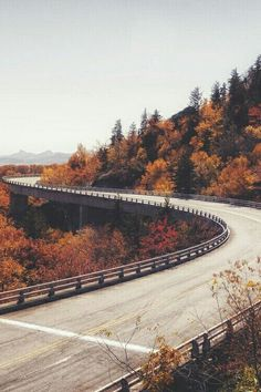 Immagine di autumn, road, and tree