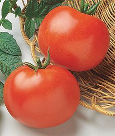 Tomato, Rutgers.HEIRLOOM. Its flavor, both for slicing and cooking, is still unequaled.