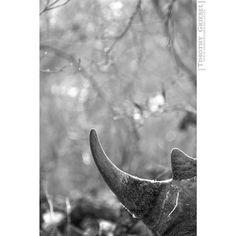 RHINO: How long will they still be around? . . . . . #focalmarked #animallovers #animalpolis #animalsofinstagram #igscwildlife #animales #exclusive_animals #wildlifephoto #wildlifeaddicts #wildlifephotography #animalworld #awesomeglobe #animalofinstagram #getoutside #getoutstayout #exploremore #theglobewanderer #letsgosomewhere #campvibes #optoutside #earthfocus #rei1440project #liveoutdoors #travelstoke #afrika #igs_africa #afrique #super_africa #ig_africa #unlimitedafrica Focalmark…