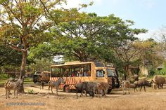 Bali Safari & Marine Park offers a fun day out, and serves as one of the island's largest and most visited animal theme parks which opened its gates in 2007. The Bali Safari & Marine Park was established by Taman Safari Indonesia; covering 40 hectares of