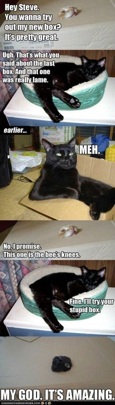 OMG..I can't stop laughing.  Now trying to find a box for my cats to do this!