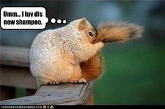 Squirrel shampoo - hee! Squirrel Memes, Cute Squirrel, Squirrels, Squirrel Tail, Baby Squirrel, Like Animals, Cute Baby Animals, Funny Animals, Animal Pictures