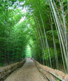 """Kineski bambus je čudnovata biljka:  Kada se seme bambusa posadi, četiri godine se ne vidi ništa osim tankog izdanka. Prosto vam dođe da prestanete da ga zalivate, misleći da od njega neće biti ništa. No, ništa nije dalje od istine. Veliko, vlaknasto korenje bambusa se za te četiri godine širi i jača, prodiruću duboko pod zemlju.  Taj nevidljivi rast mu je preko potreban, da bi pete godine izrastao 32 metra! Samo nastavite da razvijate korenje – uspeh će doći """"iznenada"""" ."""