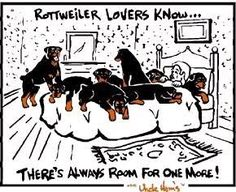 Image detail for -Happy Rottweiler : the most friendly, cute, funny dog and pup: juli ...