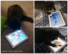 PaintForCats - iPad app
