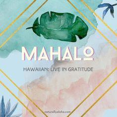An Attitude of Gratitude Hawaiian Words And Meanings, Hawaiian Phrases, Hawaiian Quotes, Aloha Hawaii, Hawaii Vacation, Blue Hawaii, Hawaii Language, Polynesian Dance, Common Quotes