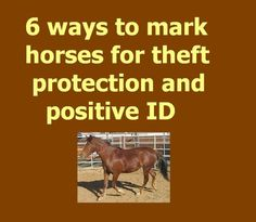 6 ways to mark #horses for theft protection and positive ID -- If your horse or pony were lost or stolen and later recovered, would you be able to provide a positive identification of him or her? #equestrian