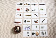 Exploring nature through photography - a Reggio Emilia inspired provocation [from Sapling House]