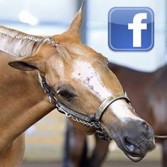 Use AQHA's Facebook page to get fast customer service and AQHA information at your fingertips!