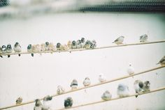 bird on a wire by mtaylorz11, via Flickr