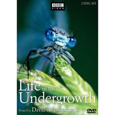 Andrew C. - Life in the Undergrowth - BBC David Attenborough guides the viewer through a miniature universe teeming with life, never normally seen, yet all around us. David Attenborough, Documentary Film, Teaching Tools, Warner Bros, Blue Eyes, My Hero, My Idol, Bbc, Documentaries