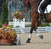 Arena Footing and Maintenance Products dressagearena.net Premier Equestrian has helped 1000's of customers to create an exceptional surface for their riding arenas.  They can help you too!
