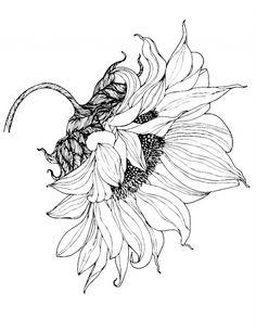 Sunflower Sketches, Sunflower Drawing, Sunflower Art, Sunflower Pattern, Pattern Flower, Plant Drawing, Painting & Drawing, Drawing Sketches, Art Drawings