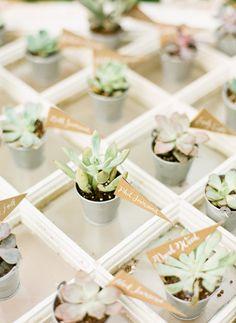 DIY personalized succulent plants! So cute!