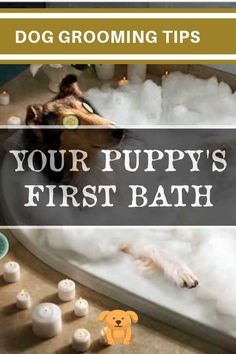 Dog Grooming Tips That Save You Money - Article 152 >>> Click image to read more details. Dog Grooming Tips, Dog Grooming Business, New Puppy, Dog Care, Pet Dogs, Puppies, Money, Image, Cubs