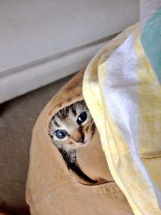 21 Kittens Hanging Around In Pockets
