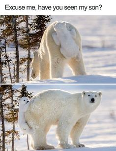 Lustige Tier Memes des Tages - 30 Bilder - Lovely Animals World Animal Jokes, Funny Animal Memes, Cute Funny Animals, Funny Animal Pictures, Cute Baby Animals, Funny Cute, Funny Memes, Adorable Pictures, Animal Funnies