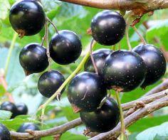 Fruit, Garden, Food, Meal, The Fruit, Garten, Essen, Hoods, Lawn And Garden
