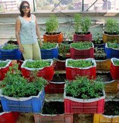 Mumbai residents convert terrace into garden, grow 15 kinds of veggies, herbs organically