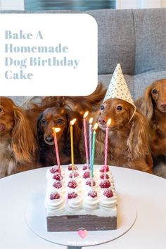 What better way to celebrate your dog's birthday than with a doggy birthday cake! You could spend hours searching the internet for a dog-friendly birthday cake recipe, or you could give The Innocent Hound Dog Birthday Cake Mix a whirl. It's simple, no fuss, made in Britain from locally sourced ingredients, is 100% grain-free and doesn't contain any nasties. This grain-free, meaty dog birthday cake recipe only requires you to add 2 eggs and water and only takes up to 25 mins to bake. Dog Birthday Gift, Puppy Birthday Parties, Birthday Ideas, Birthday Cake, Homemade Peanut Butter, Homemade Dog Treats, 2 Eggs, Hound Dog, Themed Cakes