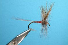 The famous Catskill Red Quill fly --- a bug that doesnt look barf-tastic