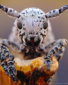 ━━━━━━━━━━━━━━━━━━━ Photo by Congratulations! Selection by ━━━━━━━━━━━━━━━━━━━ Team Microscopic Photography, Macro Photography, Weird Creatures, Sea Creatures, Insect Eyes, Close Up, Cool Insects, N Animals, Cool Bugs