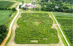 Harvard's Royal Oak Farm apple maze believed to be first in country   Northwest Herald