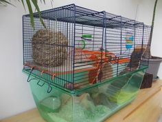 Do your research on cage size, design etc BEFORE YOU BUY IT. Syrians and Dwarf Hamsters need different types of cages, as well as no mesh shelfing as it hurts their feet. Here are some pet owners lay outs that over come the probelm of design flaws.