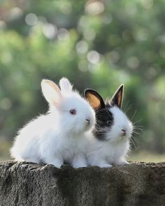 Two brave little bunnies enthusiastically standing at the life's start. Super Cute Animals, Cute Little Animals, Cute Baby Bunnies, Cute Babies, Rabbit Season, Beautiful Rabbit, White Rabbits, Pet Rabbit, Cute Animal Drawings