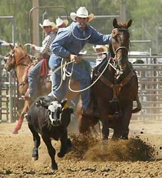 Cody rodeo in Wyoming Cody Wyoming, Cheyenne Wyoming, Jackson Hole Wyoming, Cody Rodeo, Yellowstone National Park, National Parks, Hot Cowboys, Rodeo Life, Charro