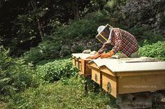 """Le top bar del Progetto """"potere allo sciame"""" per un'apicoltura sostenibile posizionate a Codera grazie all'adesione degli Amici della Val Codera :-) Fotografia di Ivan Previsdomini"""
