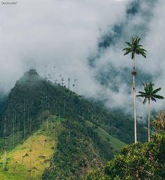 Valle del Cocora, Salento, Quindío Latin America, Caribbean, Exotic, Mystery, Scenery, Country Roads, Sky, Landscape, Beach