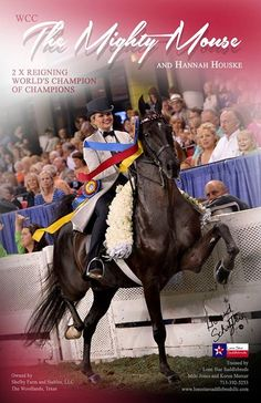 WCC The Mighty Mouse...American Saddlebred