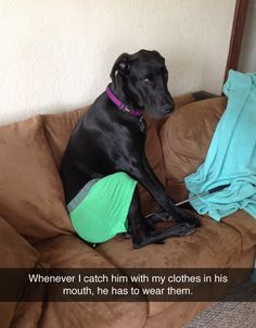 """Whenever I catch him with my clothes in his mouth, he has to wear them."""