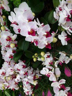 Orchids ❤