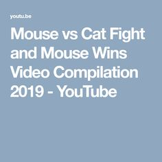 Mouse vs Cat Fight and Mouse Wins Video Compilation 2019