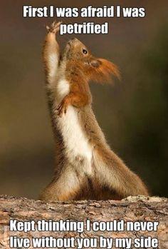 Disco squirrel!