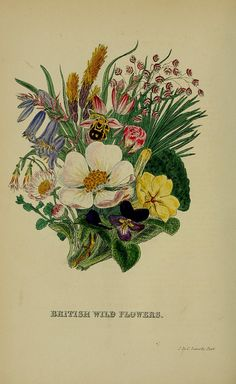 British wild flowers - n381_w1150 by BioDivLibrary, via Flickr
